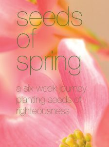 seeds-of-spring-women's-resource